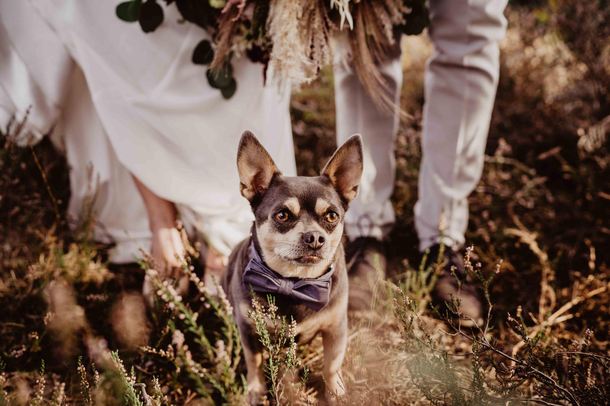 Hochzeit_B&P_img_1